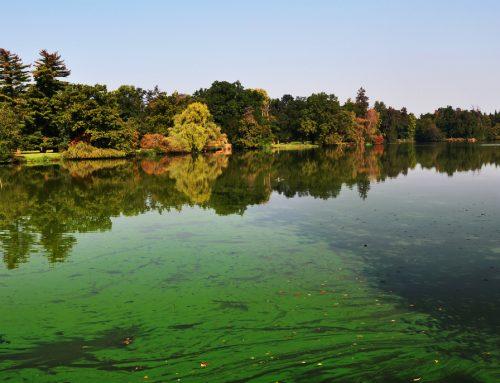 Identifying Harmful Algae and Invasive Plants That Should Be Removed From Your Lake