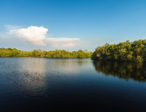 Seminole County: Lake Management Guide